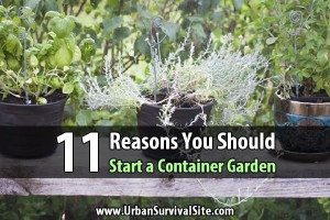 11 Reasons You Should Start a Container Garden