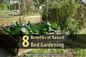 8 Benefits Of Raised Bed Gardening
