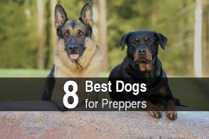 The 8 Best Dogs For Preppers