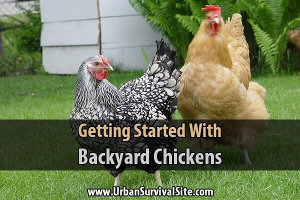 Getting Started With Backyard Chickens  Urban Survival Site