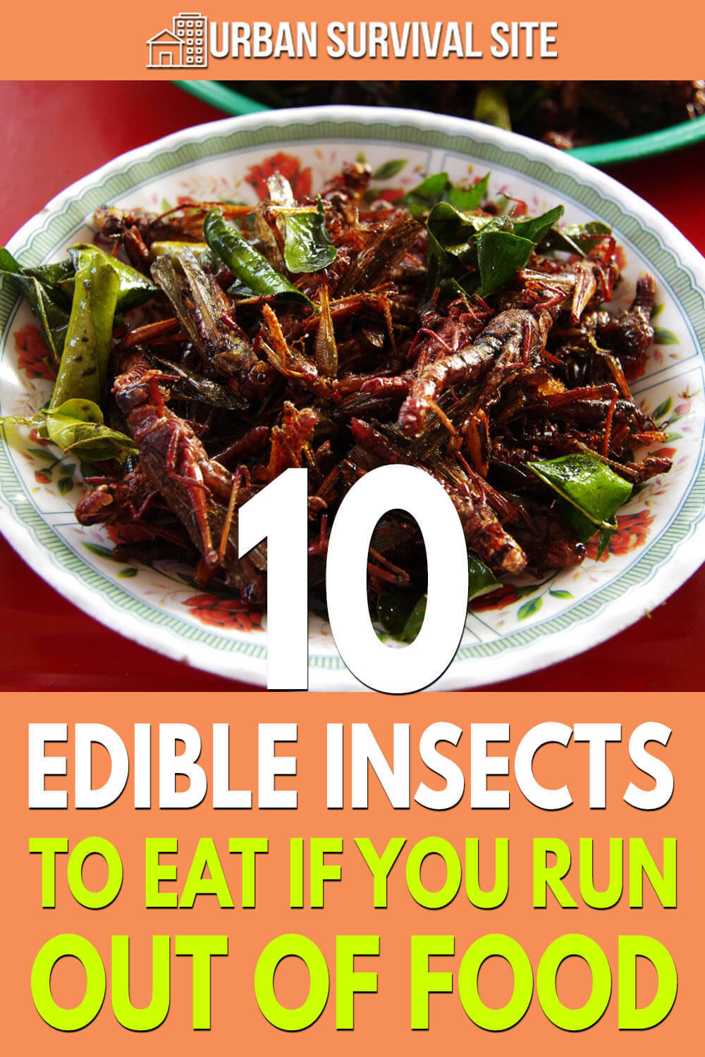 10 Edible Insects To Eat If You Run Out Of Food