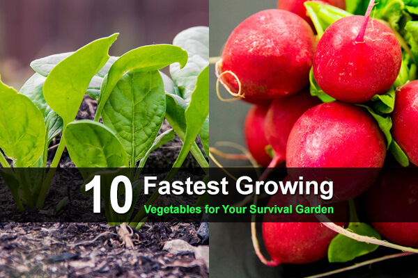 10 Fastest Growing Vegetables for Your Survival Garden