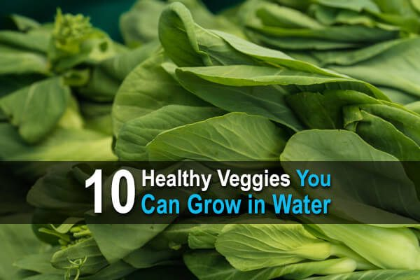 10 Healthy Veggies You Can Grow in Water