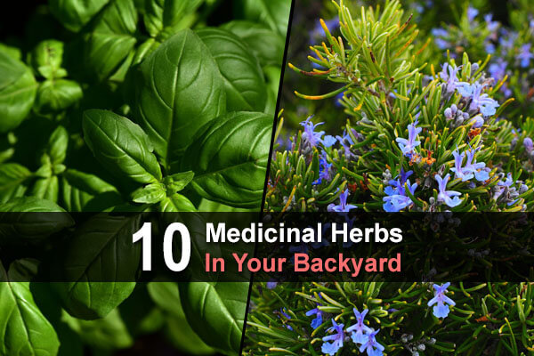 10 Medicinal Herbs In Your Backyard