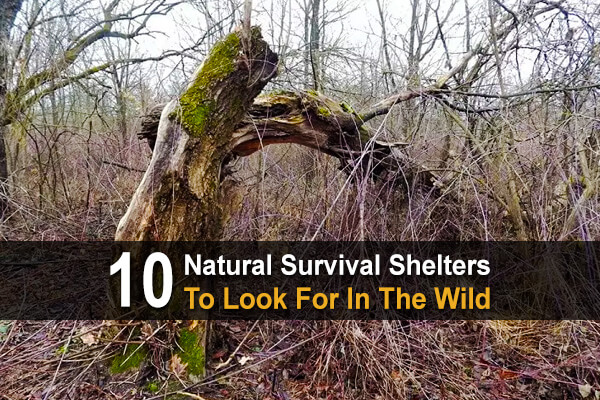 10 Natural Survival Shelters To Look For In The Wild