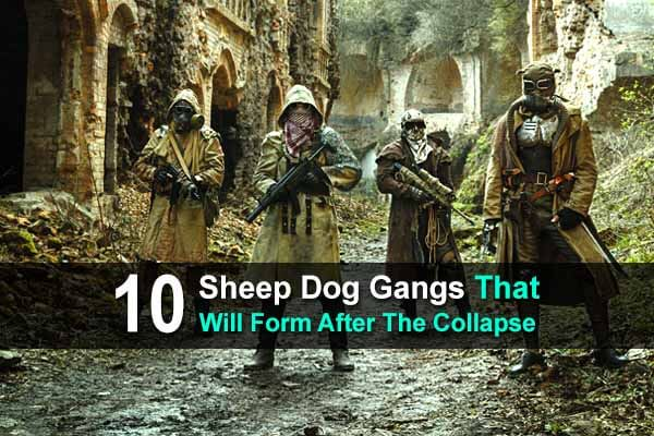 10 Sheep Dog Gangs That Will Form After The Collapse