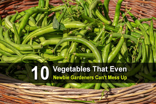 10 Vegetables That Even New Gardeners Can't Mess Up