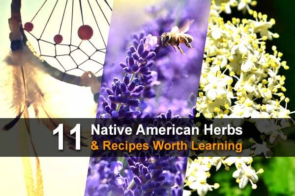 11 Native American Herbs & Recipes Worth Learning