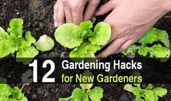 12 Gardening Hacks for New Gardeners