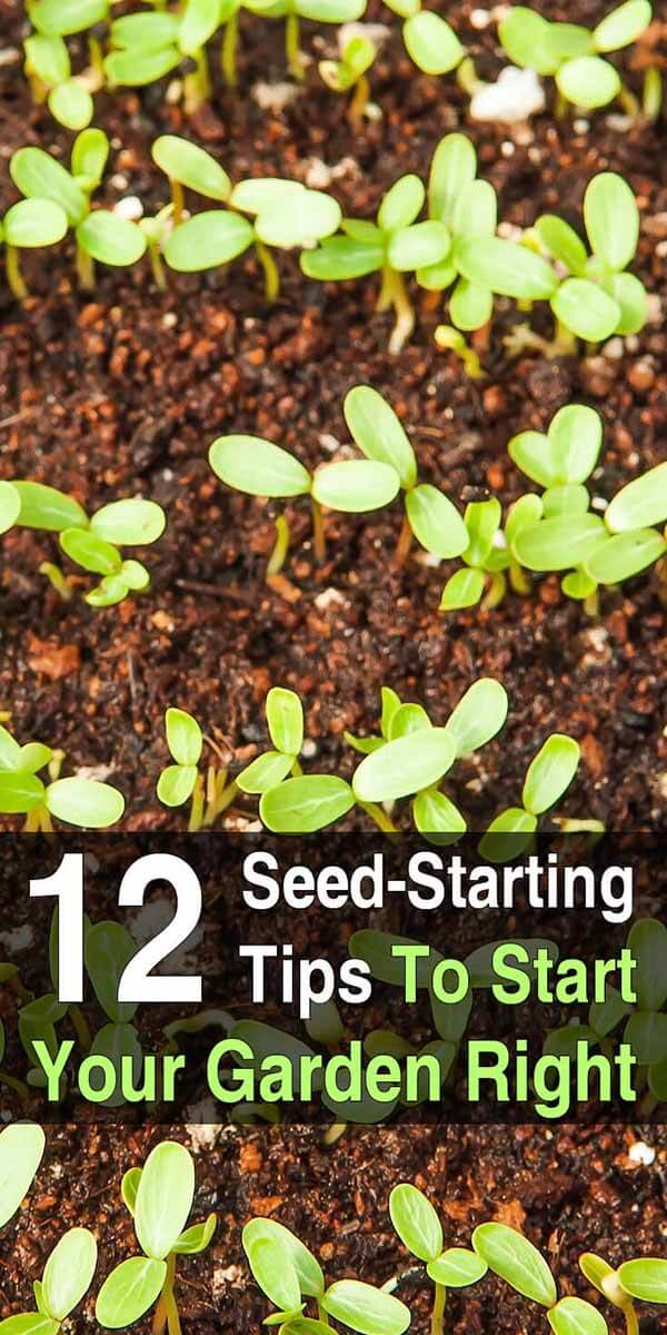12 Seed Starting Tips to Start Your Garden Right