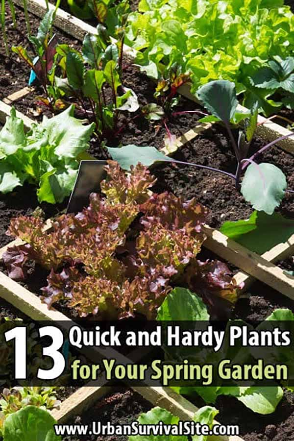 13 Quick and Hardy Plants for Your Spring Garden