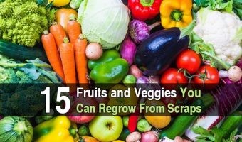15 Fruits and Veggies You Can Regrow From Scraps