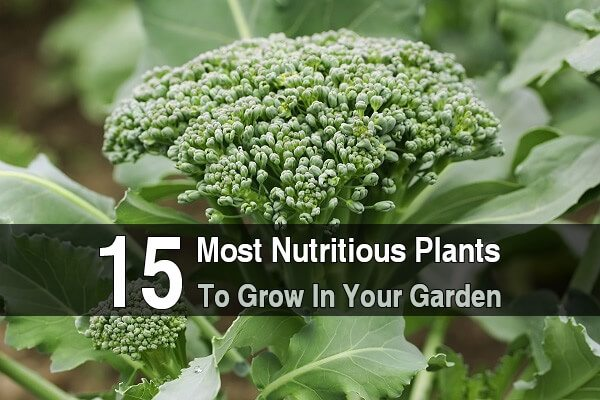 15 Most Nutritious Plants To Grow In Your Garden