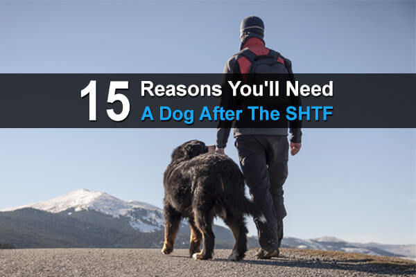 15 Reasons You'll A Dog After The SHTF
