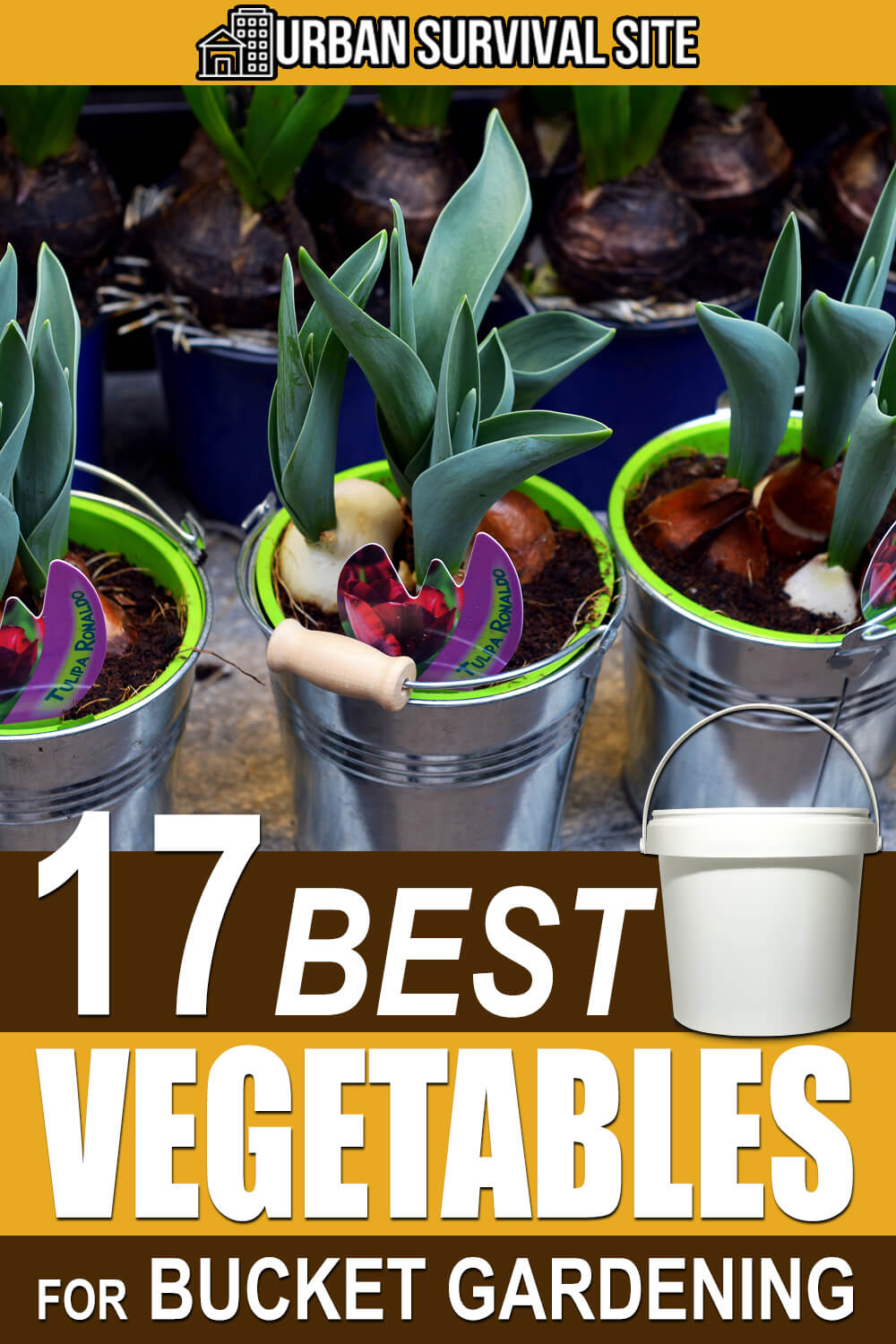 17 Best Vegetables for Bucket Gardening