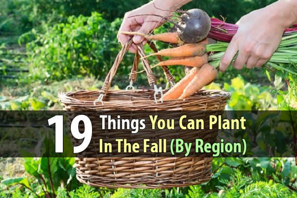19 Things You Can Plant In The Fall (By Region)