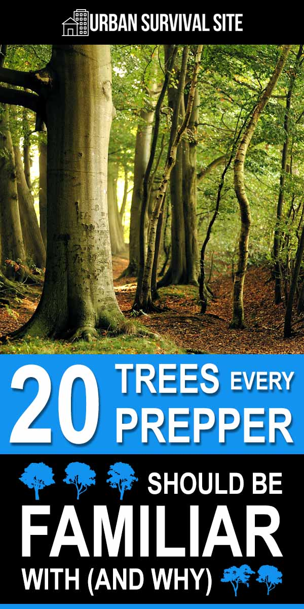 20 Trees Every Prepper Should Be Familiar With (And Why)
