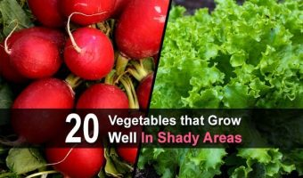 20 Vegetables that Grow Well in Shady Areas
