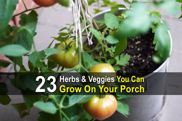 23 Herbs and Veggies You Can Grow on Your Porch