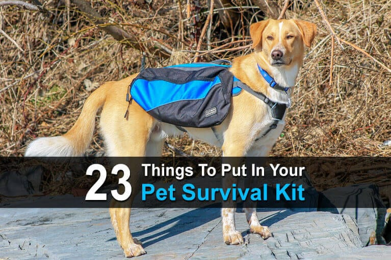 23 Things To Put In Your Pet Survival Kit