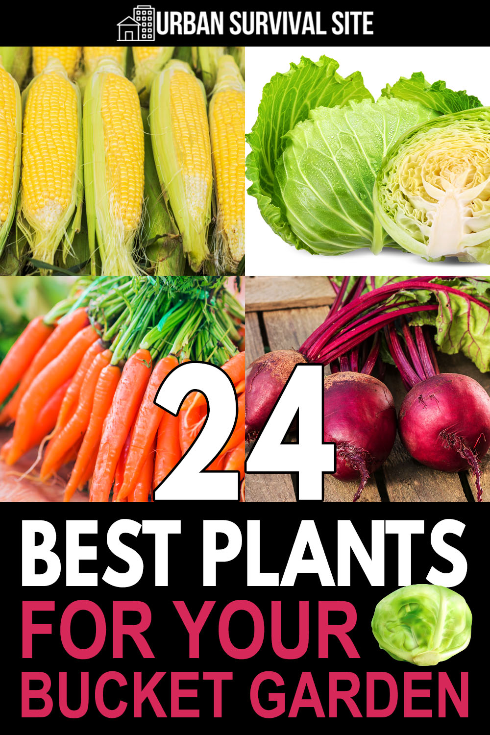 24 Best Plants For Your Bucket Garden