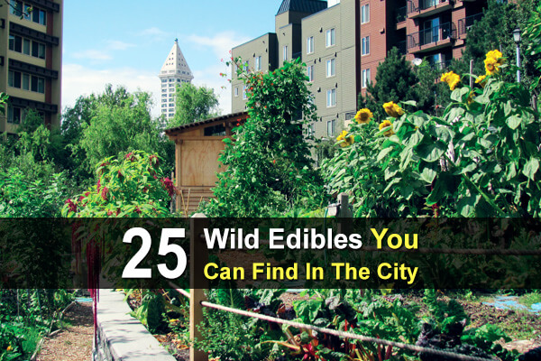 25 Wild Edibles You Can Find In The City