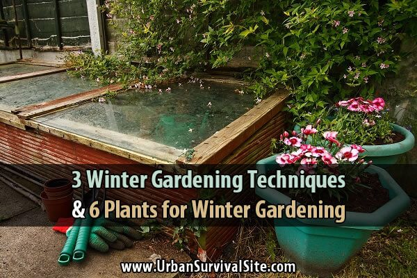 3 Winter Gardening Techniques and 6 Plants for Winter Gardening