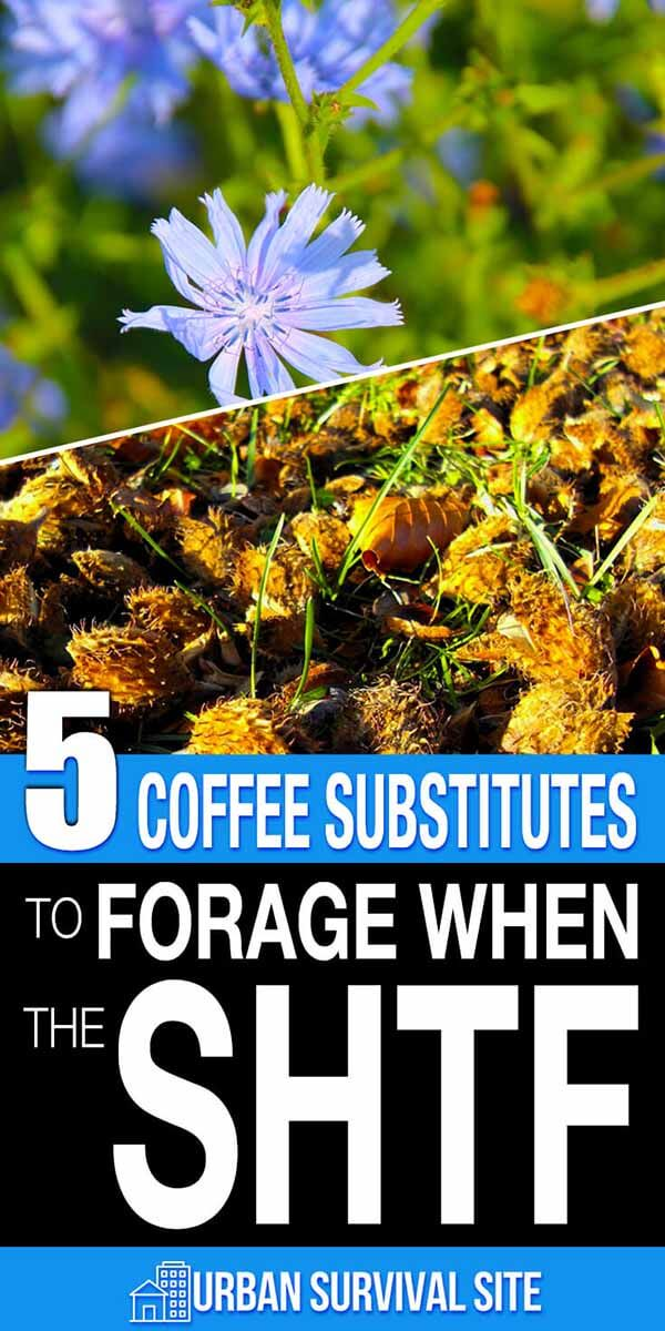 5 Coffee Substitutes to Forage When The SHTF