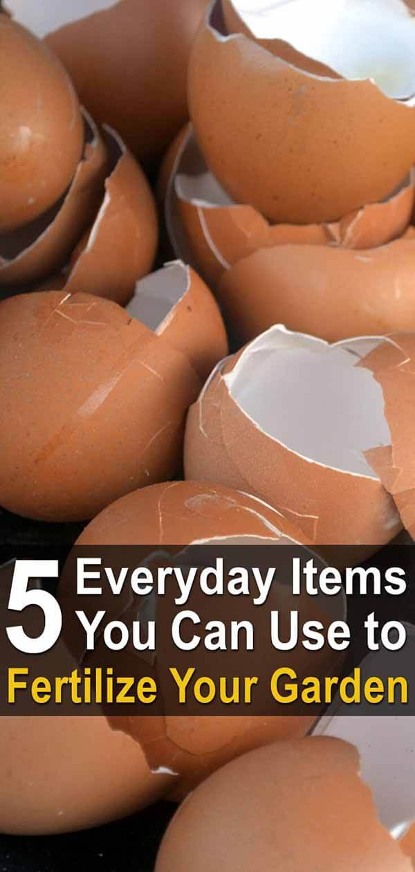 5 Everyday Items You Can Use to Fertilize Your Garden