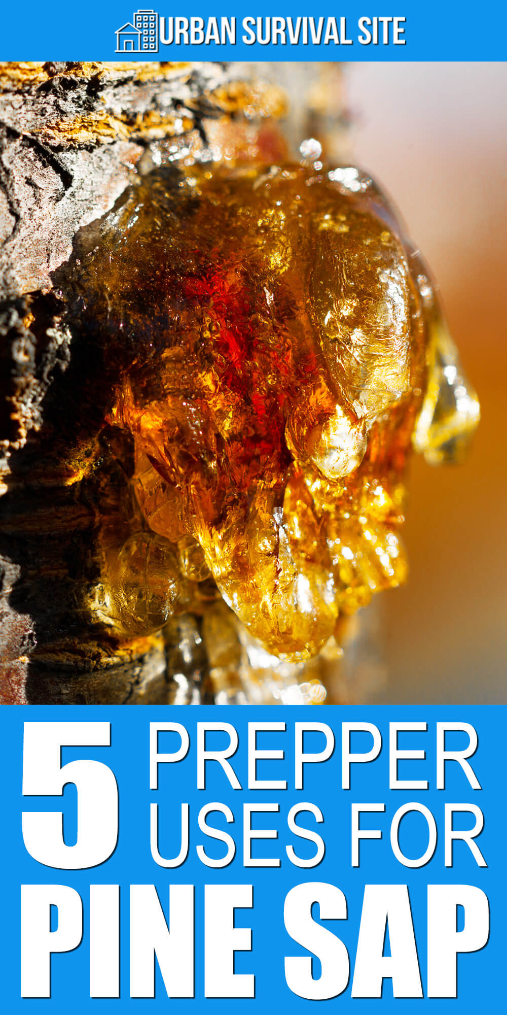 5 Prepper Uses for Pine Sap