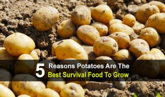 5 Reasons Potatoes Are The Best Survival Food To Grow