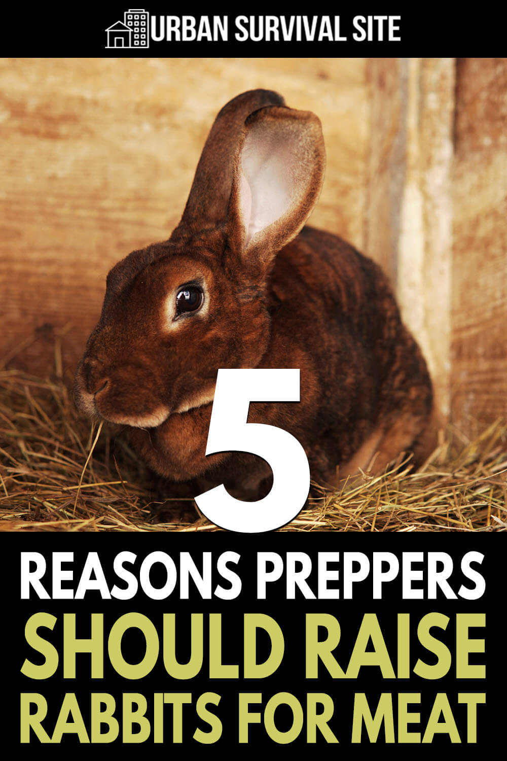 5 Reasons Preppers Should Raise Rabbits for Meat