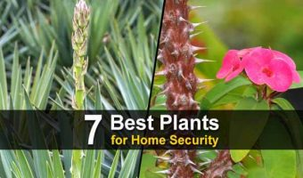 7 Best Plants for Home Security