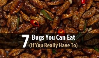 7 Bugs You Can Eat (If You Really Have To)