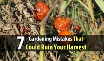 7 Gardening Mistakes That Could Ruin Your Harvest