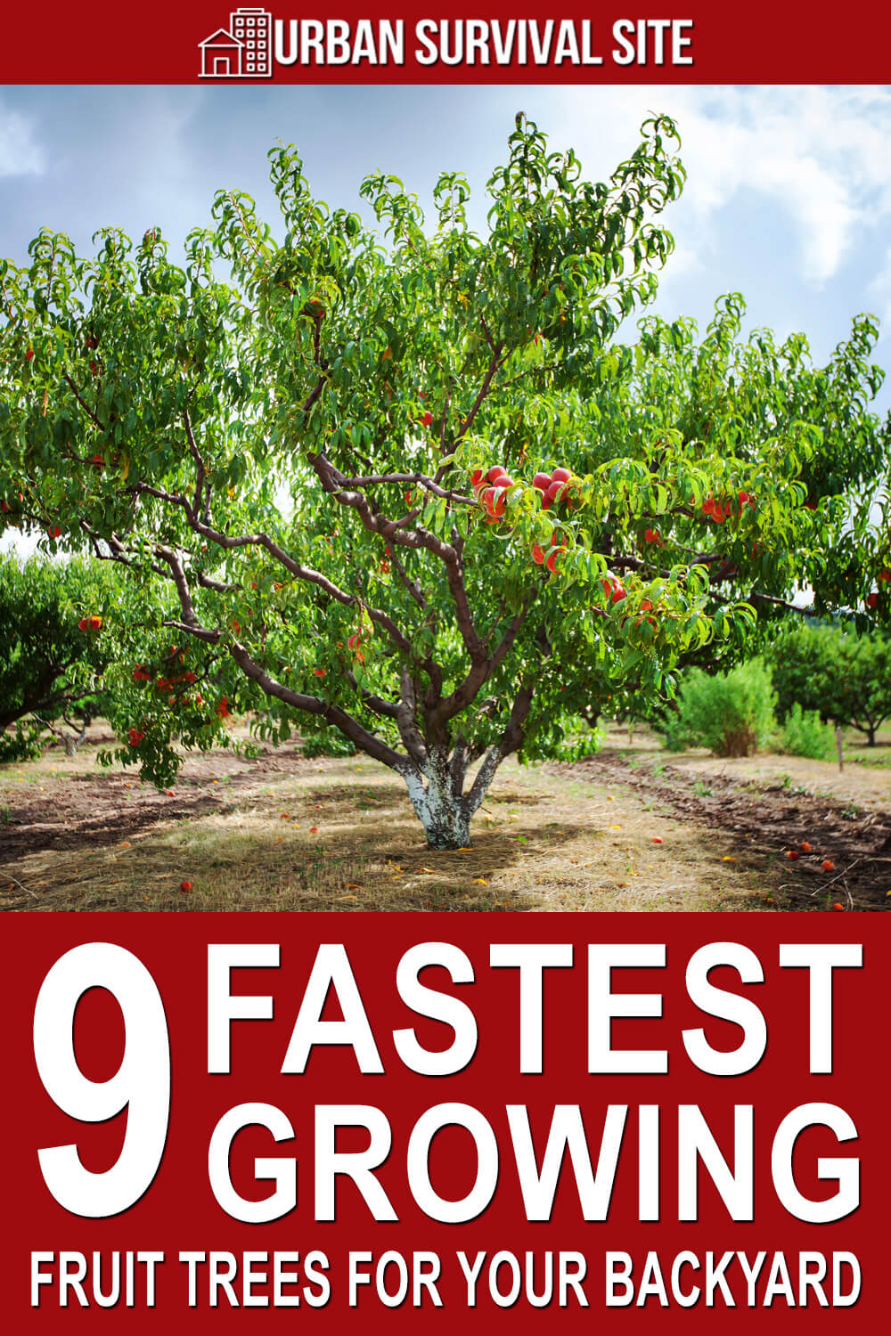 9 Fastest Growing Fruit Trees for Your Backyard