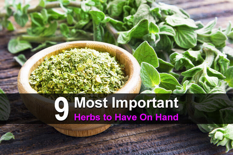9 Most Important Herbs to Have On Hand