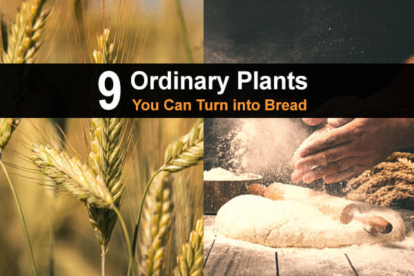 9 Ordinary Plants You Can Turn Into Bread