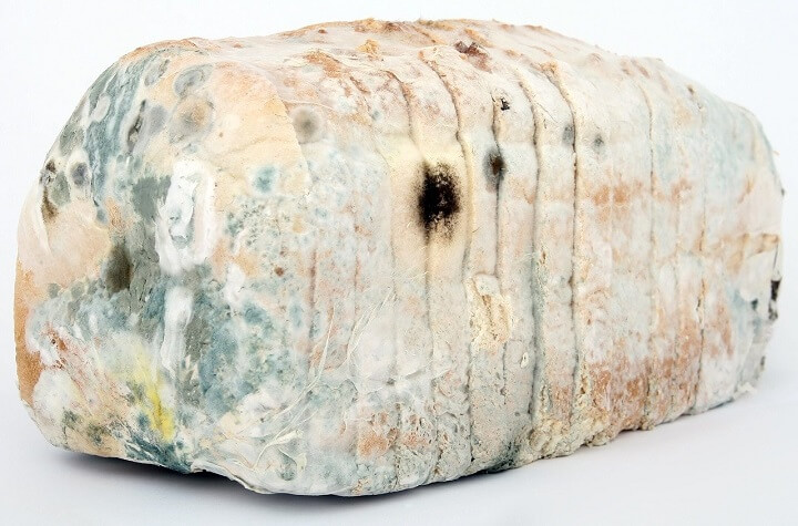 Aged Loaf of Bread With Mold