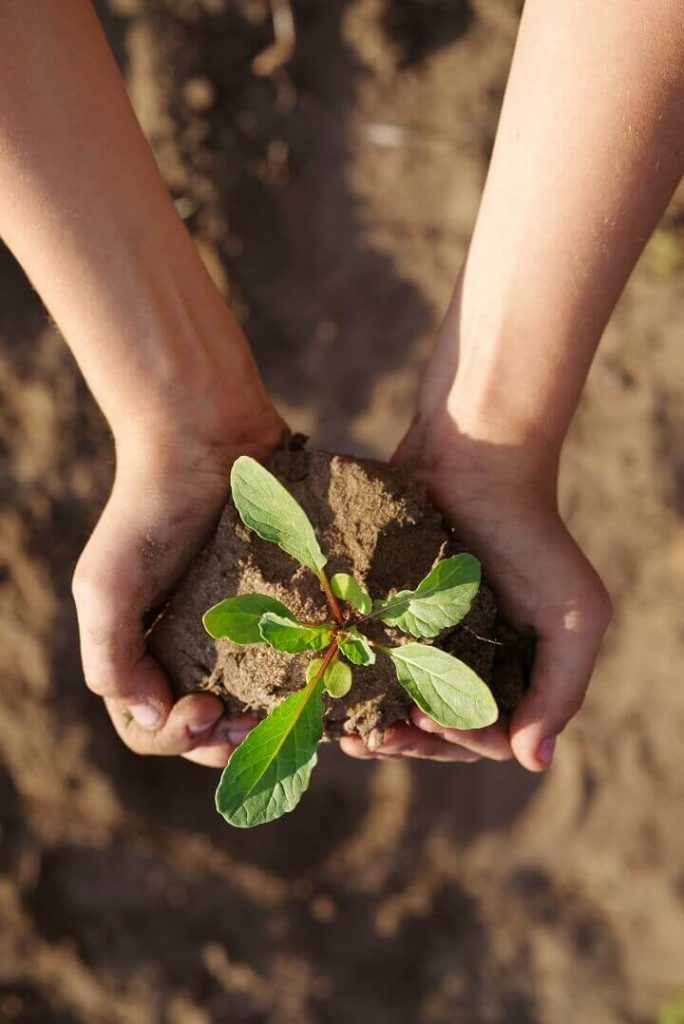 Arugula Plant In Hands Of Child