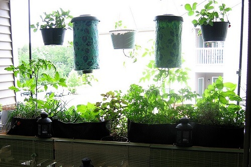 Balcony Garden with Hanging Plants