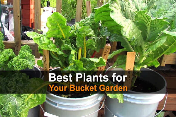 Best Plants For Your Bucket Garden