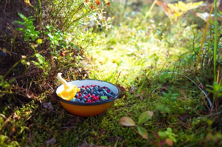 Bowl of Wild Foraged Berries and Mushroom