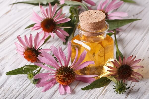 Echinacea Flowers and Tincture