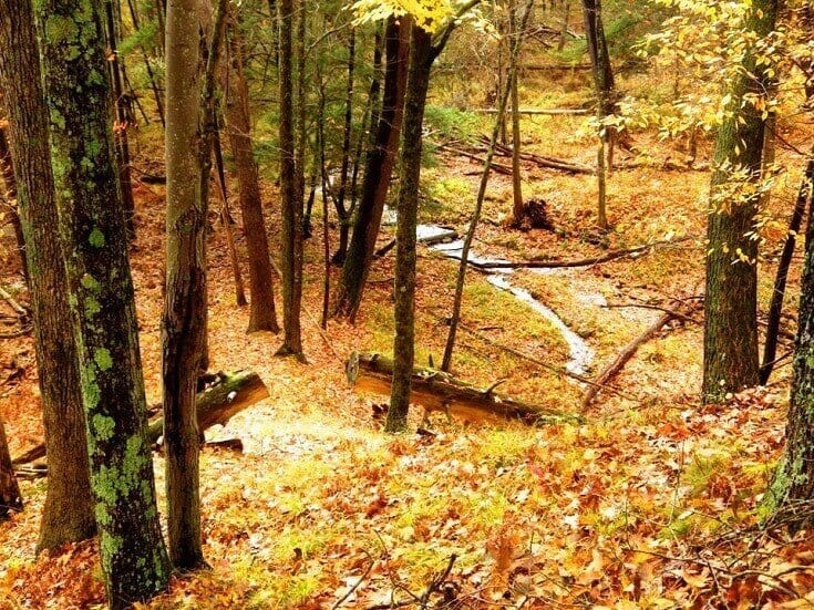 Fall Leaves On Ground In Forest