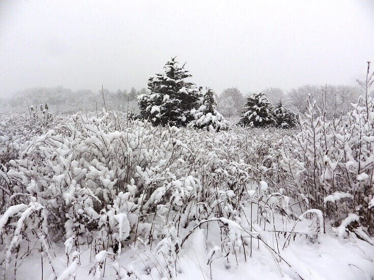 Field Covered In Snow
