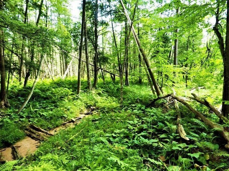 Green Forest Growth