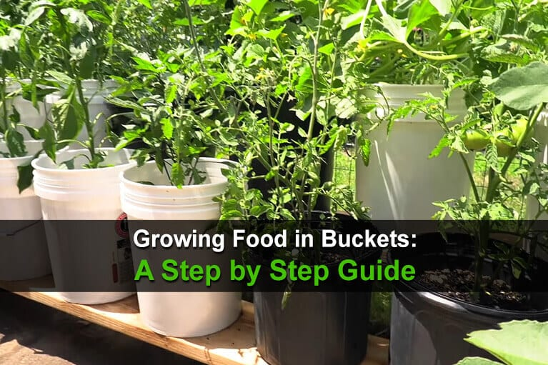 Growing Food in Buckets: A Step by Step Guide