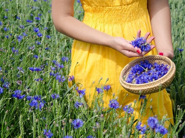 Herbalist Picking Flowers