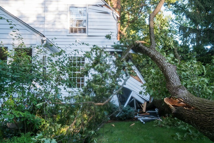 House Crushed By Tree